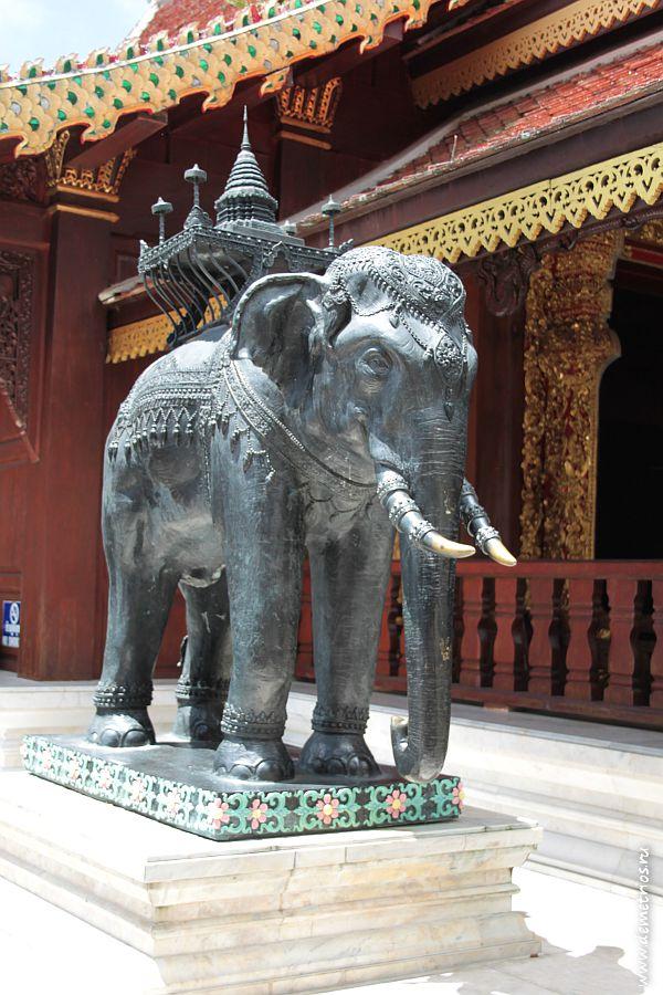 Слон в храме Ват Пратхат Дои Сутхеп, Чианг Май
