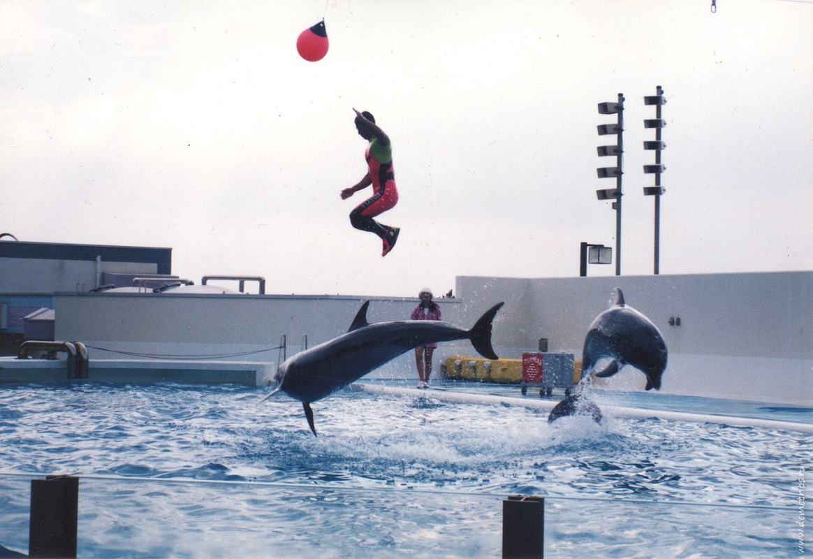 Океанариум Ниигаты, дельфины, Niigata  Aquarium, dolphin
