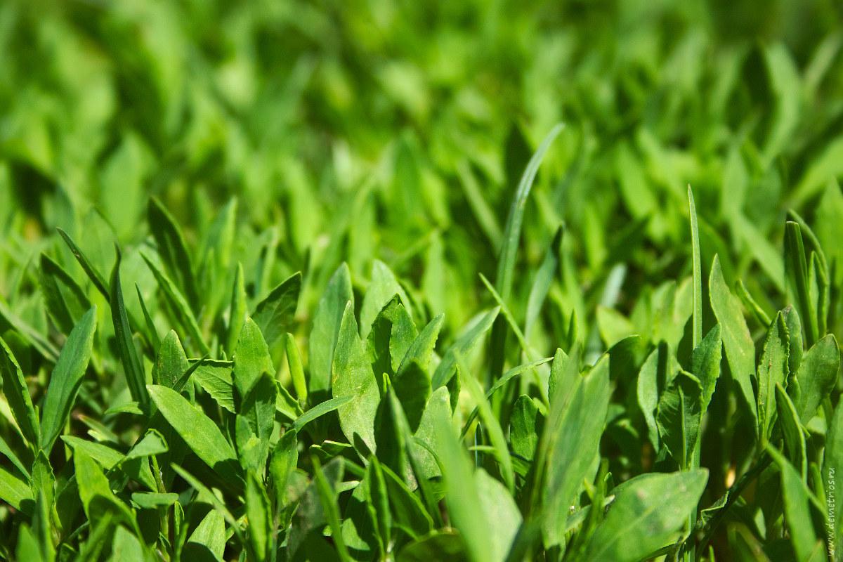 молодая весенняя трава; spring grass