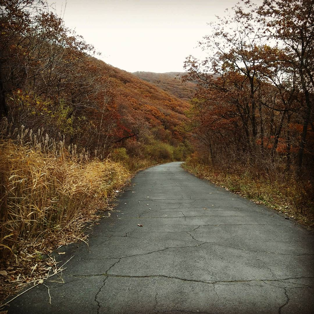 Военная дорога в лесу