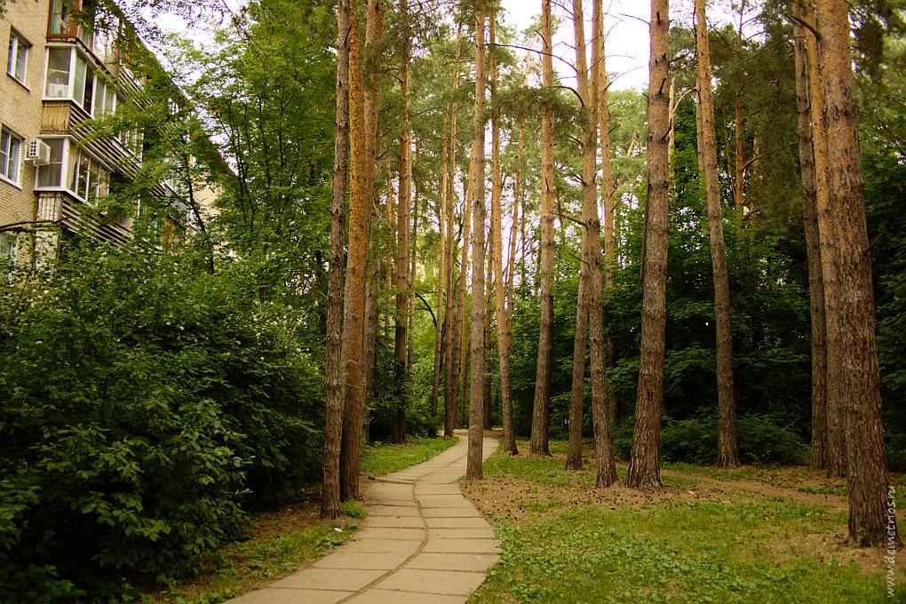 Хвойный двор в Протвино