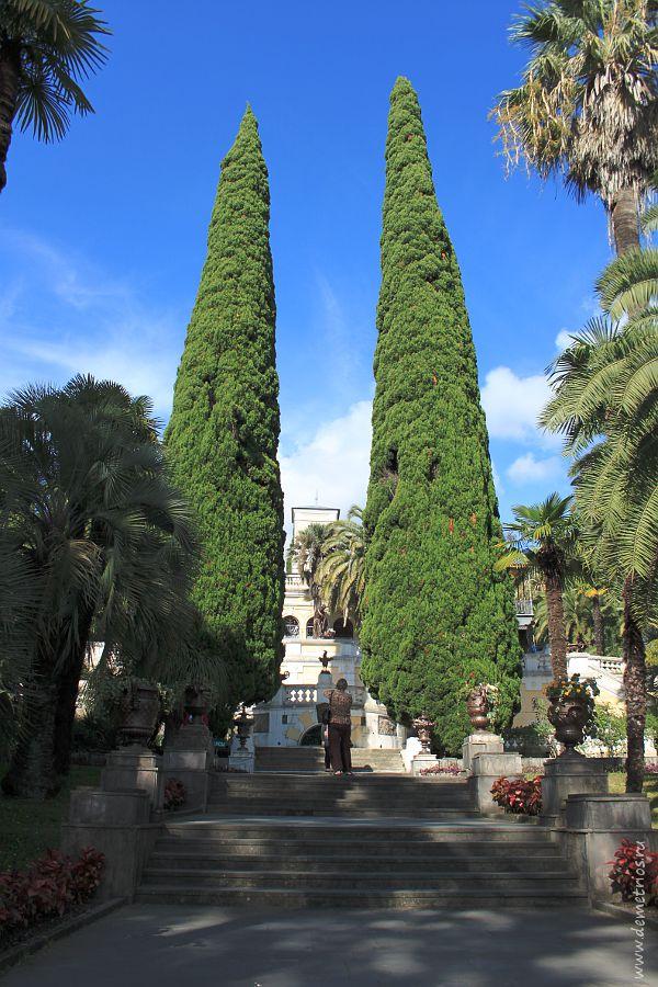 Кипарисы в Дендрариуме Сочи