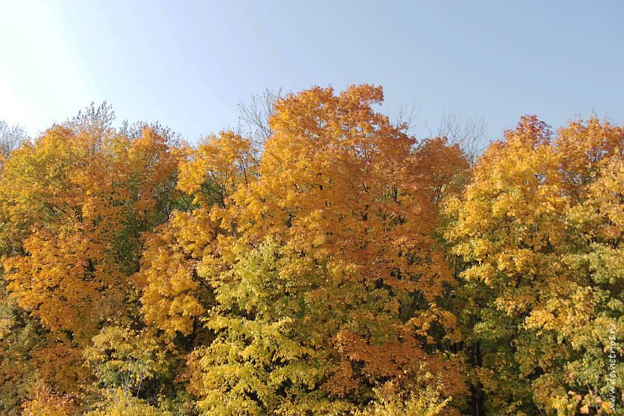Битцевский лес осенью, Москва