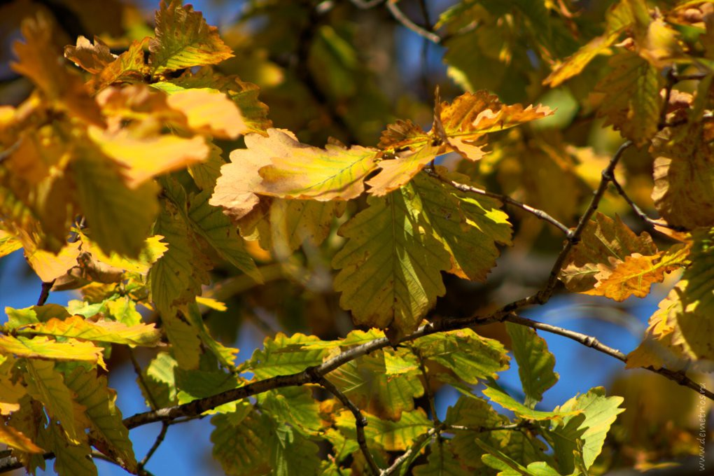 осенние листья, осень, autumn, autuml leaves