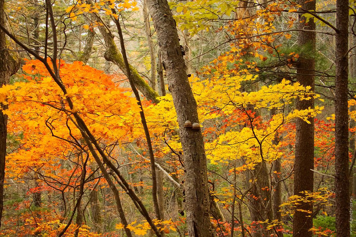 Осенний лес на горе Фалаза. Autumn forest of Falaza mountain