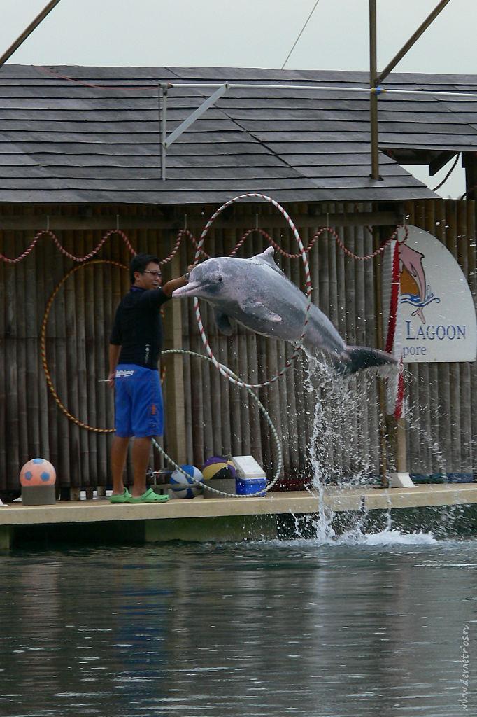 Сингапур. Сентоза. Шоу розовых дельфинов. Singapore, Sentosa, pink dolphins show
