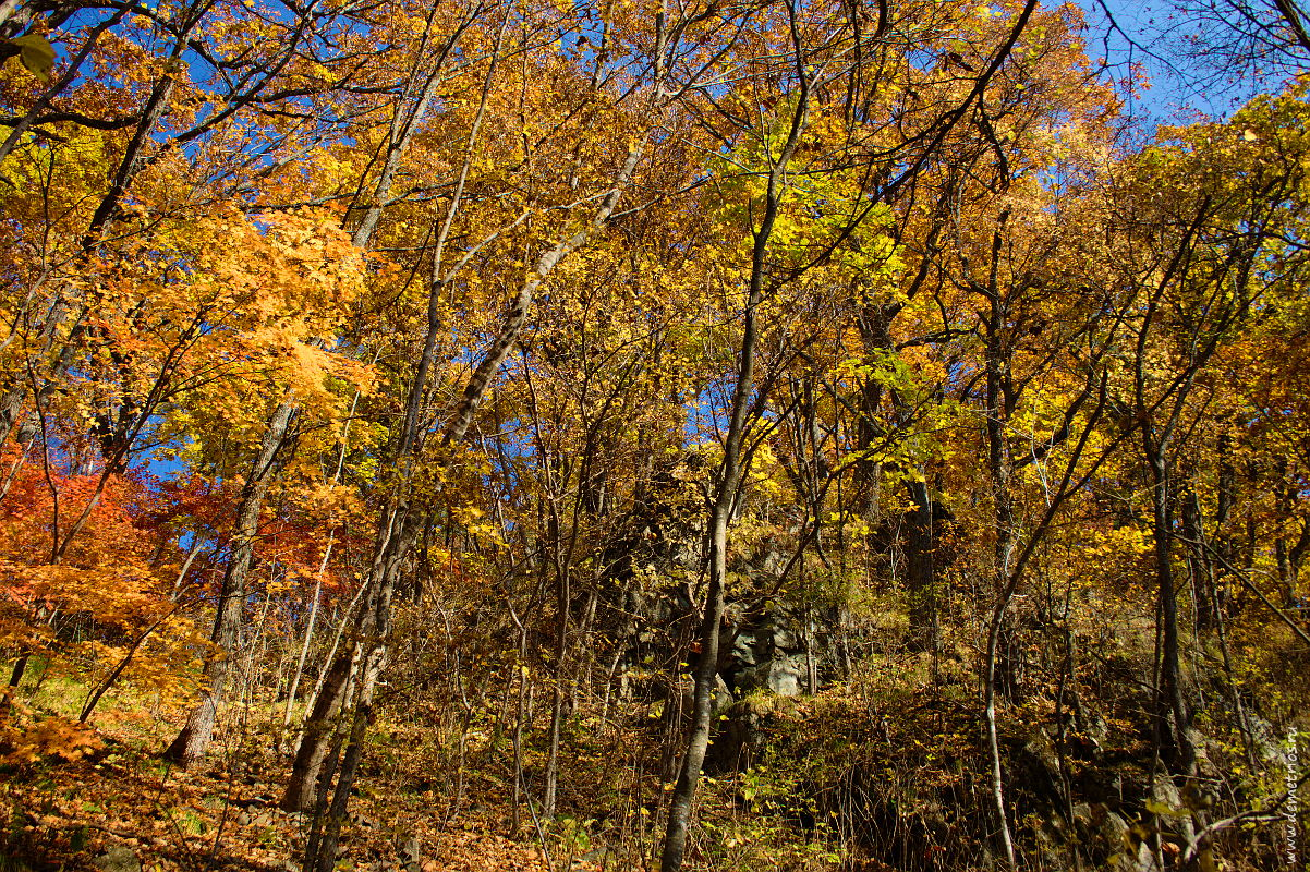 Осенний лес и скалы. Autumn forest and stones