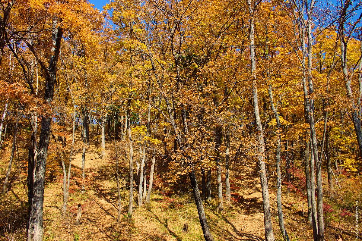 Осенний лес в лучах солнца. Sunny autumn forest